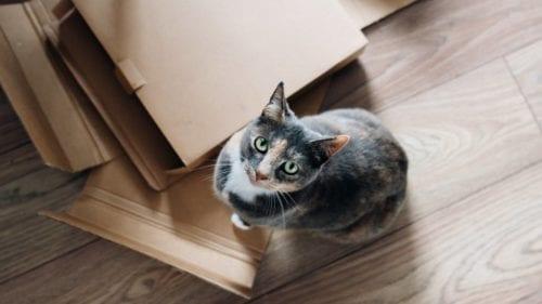 déménager où trouver des cartons